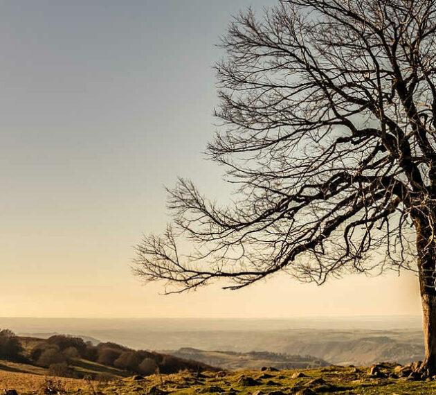 arbre sur un plateau